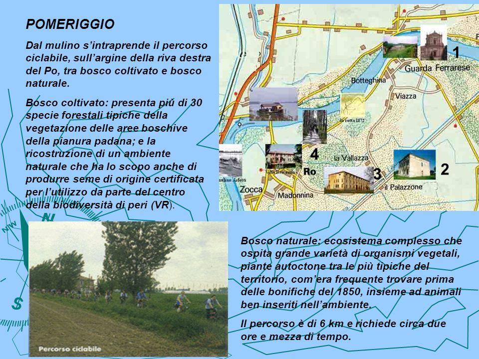 POMERIGGIO Dal mulino s'intraprende il percorso ciclabile, sull'argine della riva destra del Po, tra bosco coltivato e bosco naturale.