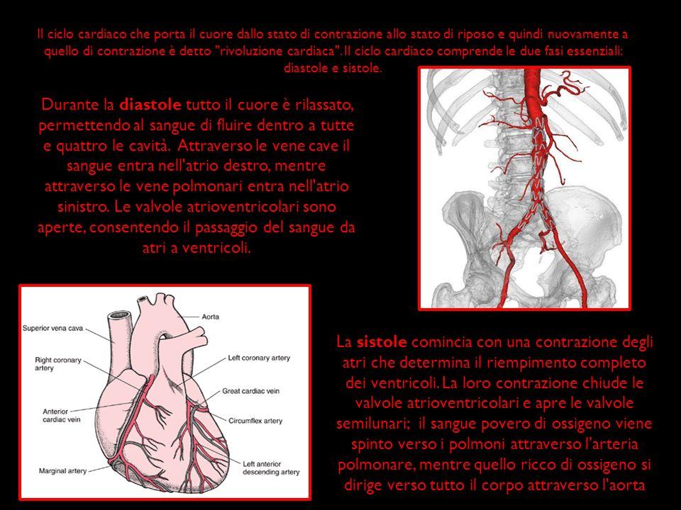 Il ciclo cardiaco che porta il cuore dallo stato di contrazione allo stato di riposo e quindi nuovamente a quello di contrazione è detto rivoluzione cardiaca . Il ciclo cardiaco comprende le due fasi essenziali: diastole e sistole.