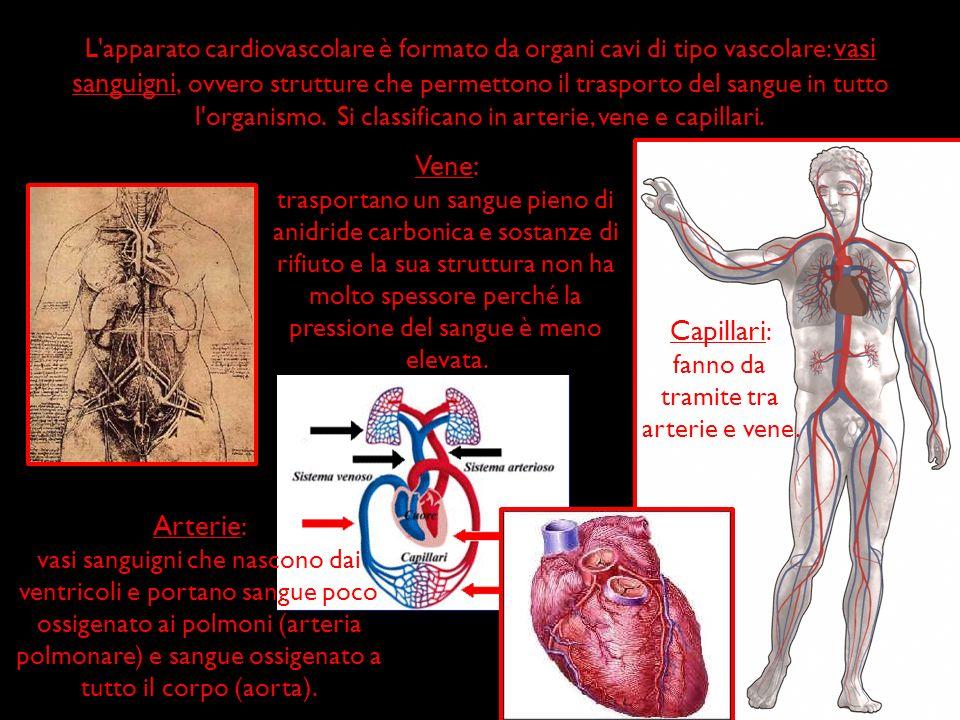 fanno da tramite tra arterie e vene.