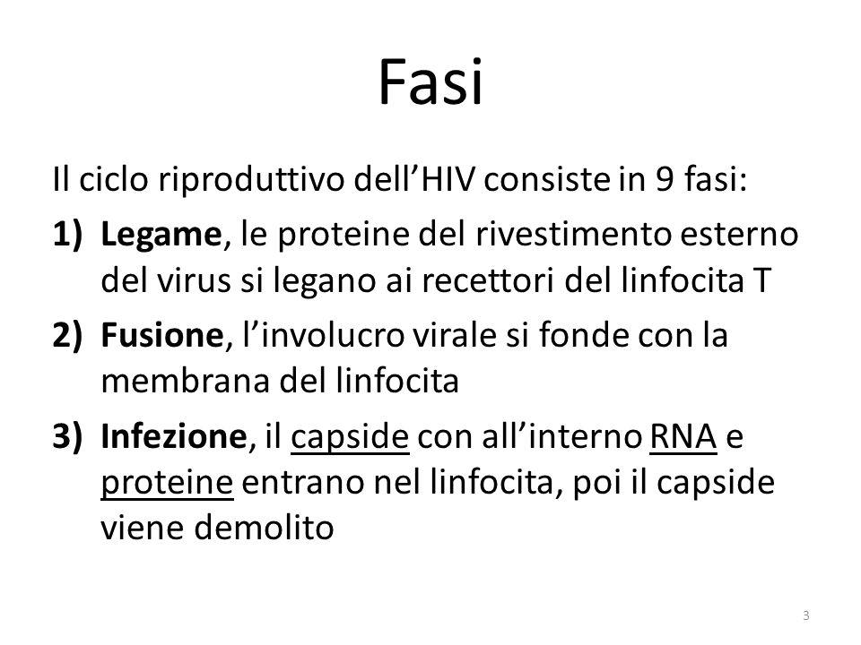 Fasi Il ciclo riproduttivo dell'HIV consiste in 9 fasi: