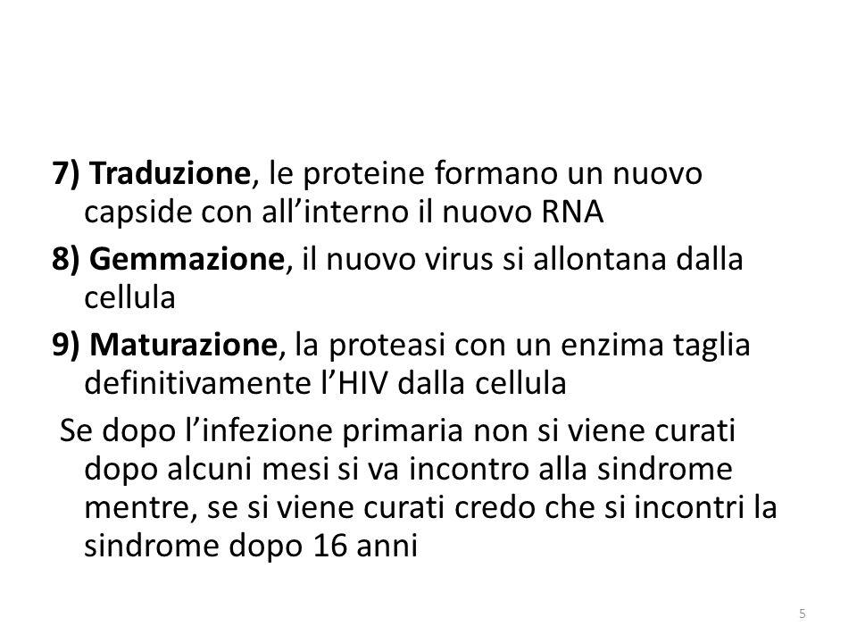 7) Traduzione, le proteine formano un nuovo capside con all'interno il nuovo RNA 8) Gemmazione, il nuovo virus si allontana dalla cellula 9) Maturazione, la proteasi con un enzima taglia definitivamente l'HIV dalla cellula Se dopo l'infezione primaria non si viene curati dopo alcuni mesi si va incontro alla sindrome mentre, se si viene curati credo che si incontri la sindrome dopo 16 anni