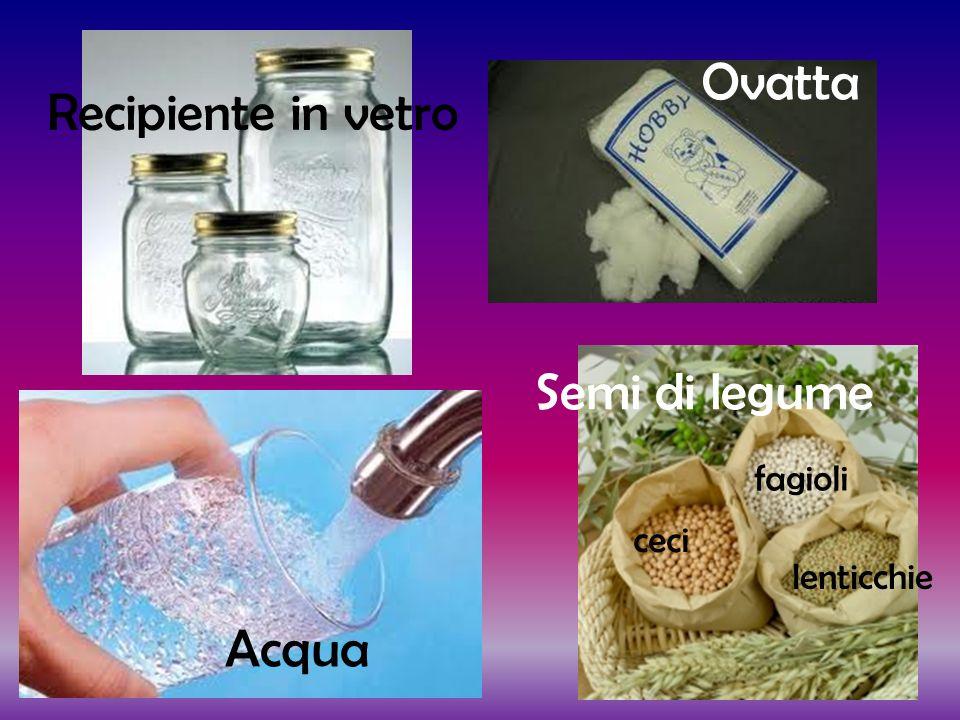 Ovatta Recipiente in vetro Semi di legume Acqua fagioli ceci
