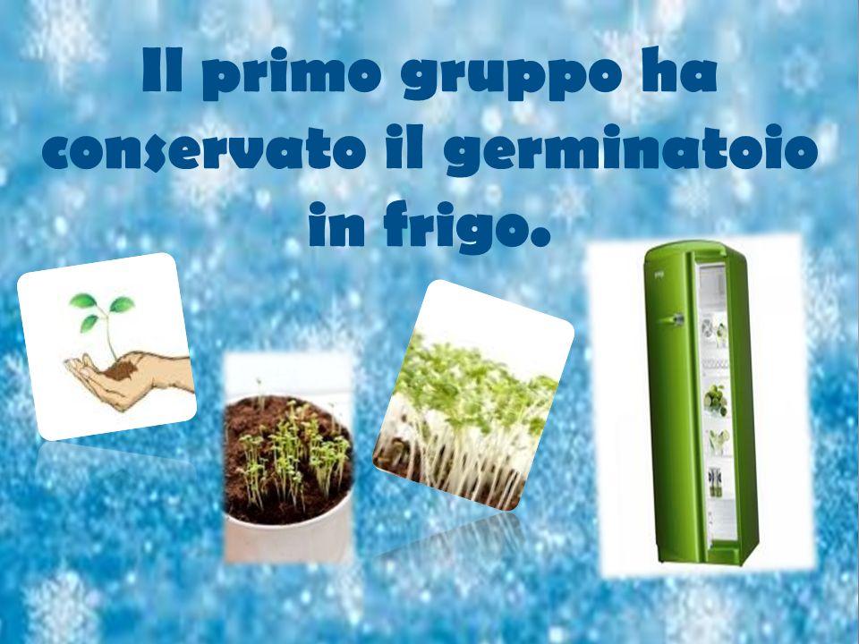 Il primo gruppo ha conservato il germinatoio in frigo.