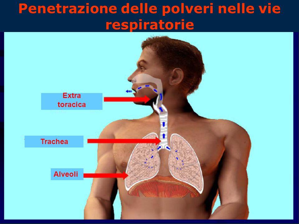 Penetrazione delle polveri nelle vie respiratorie