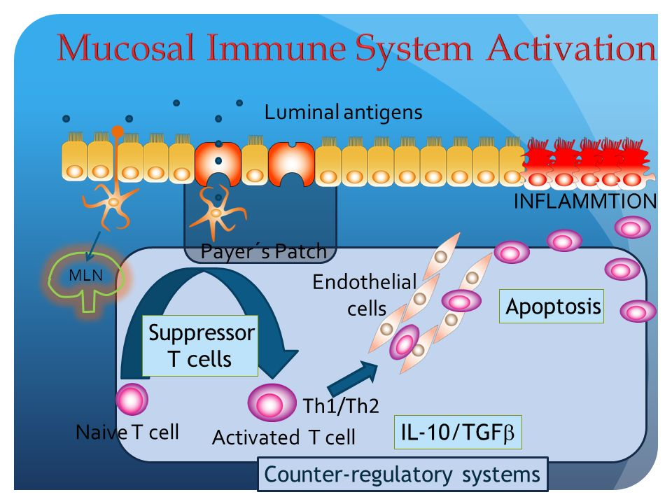 Mucosal Immune System Activation