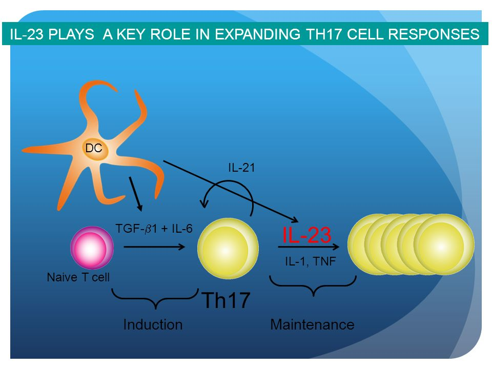 IL-23 PLAYS A KEY ROLE IN EXPANDING TH17 CELL RESPONSES