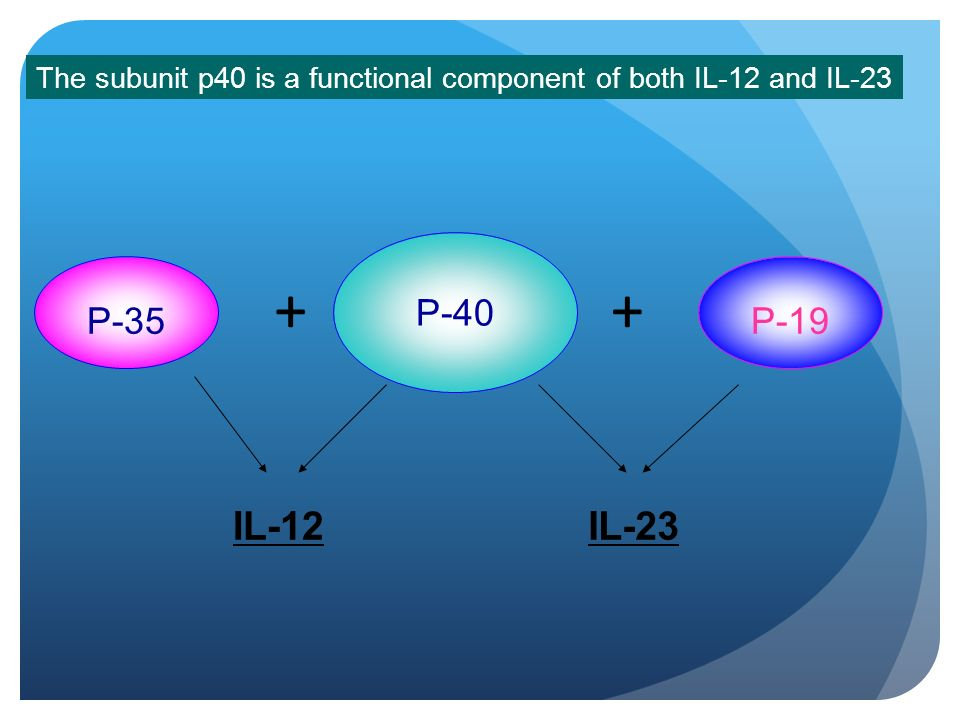 The subunit p40 is a functional component of both IL-12 and IL-23
