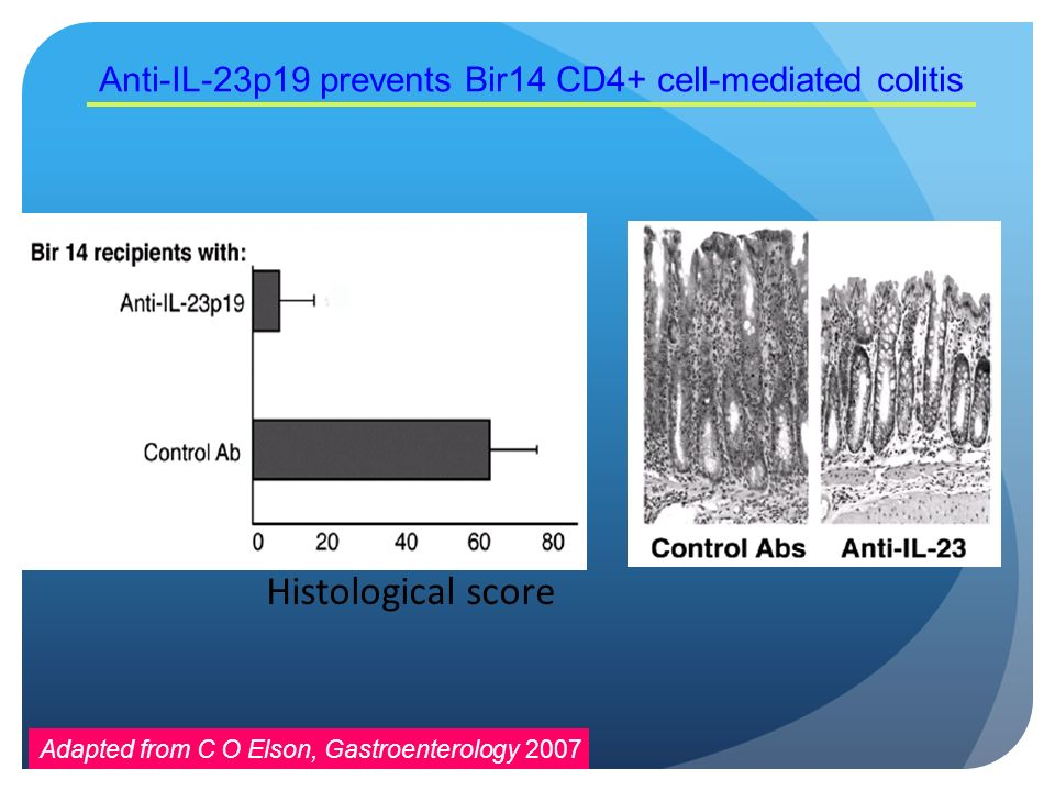 Anti-IL-23p19 prevents Bir14 CD4+ cell-mediated colitis