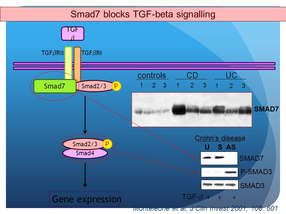 Smad7 blocks TGF-beta signalling
