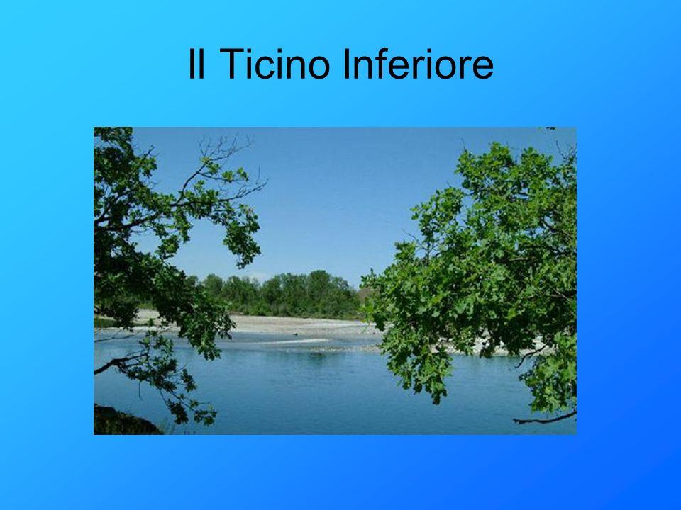 Il Ticino Inferiore