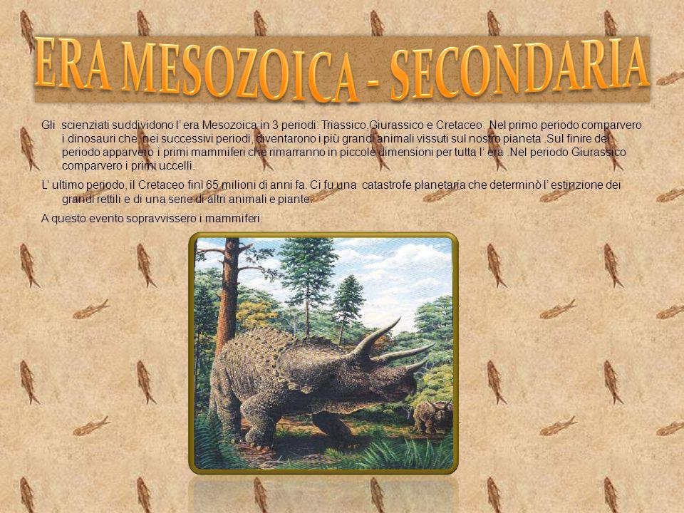 ERA MESOZOICA - SECONDARIA