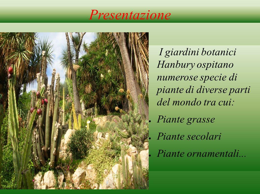 Presentazione I giardini botanici Hanbury ospitano numerose specie di piante di diverse parti del mondo tra cui: