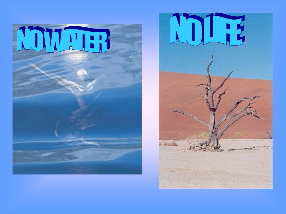 NO LIFE NO WATER