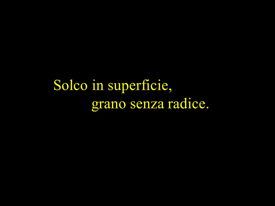 Solco in superficie, grano senza radice.