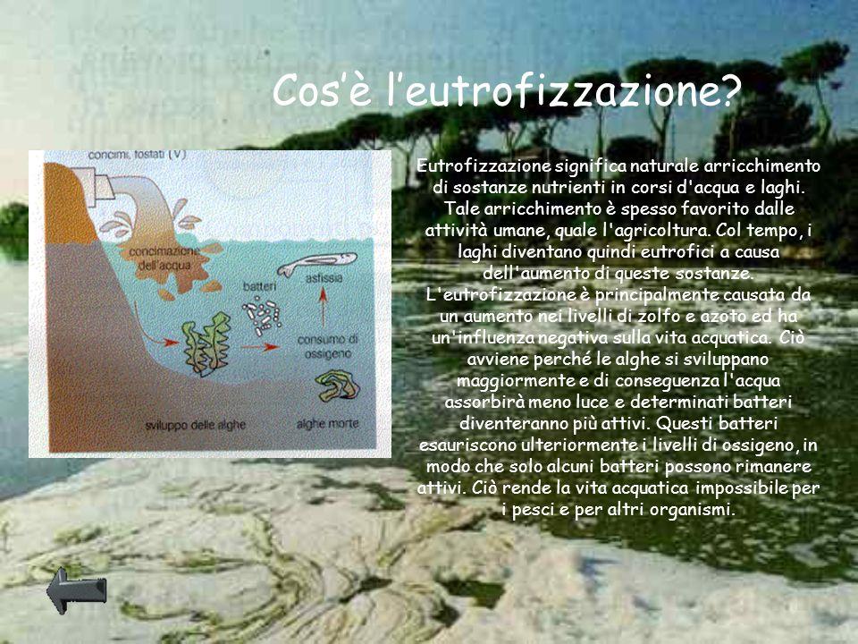 Cos'è l'eutrofizzazione