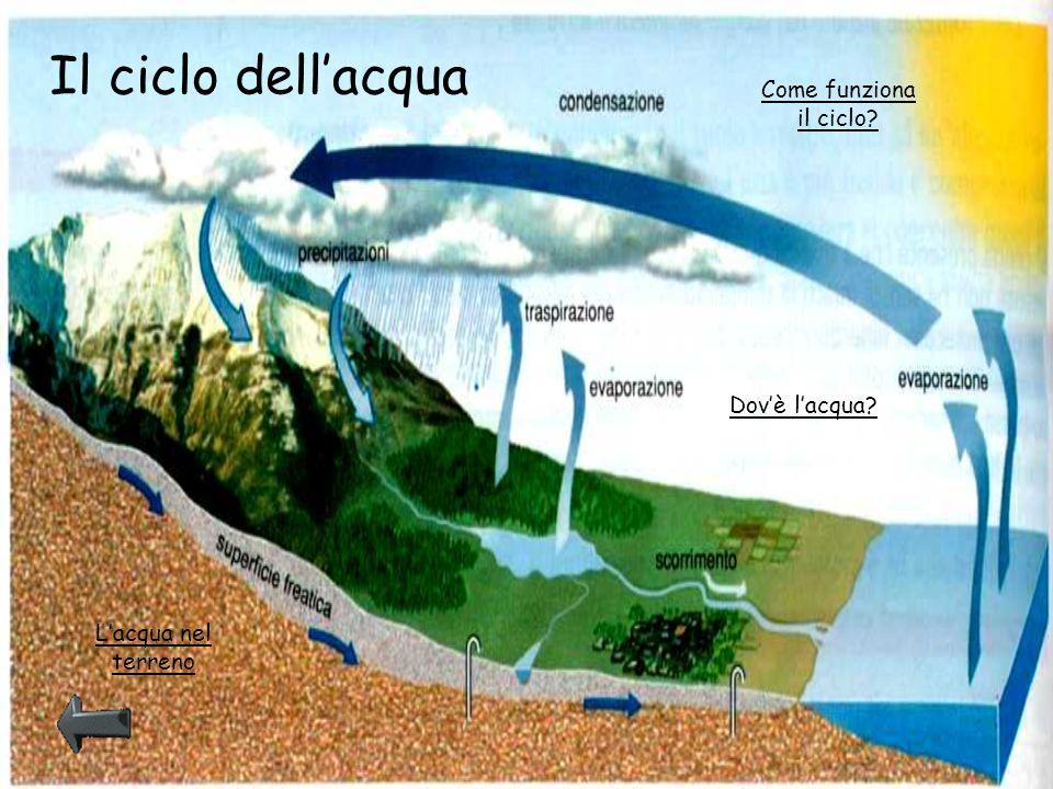 Il ciclo dell'acqua Come funziona il ciclo Dov'è l'acqua