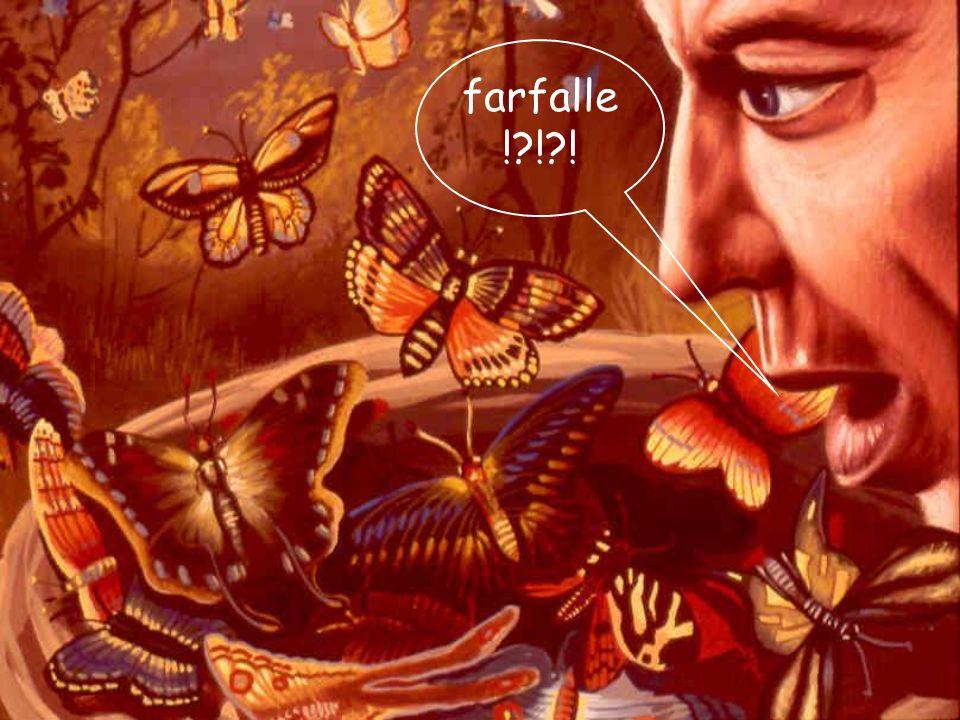 farfalle! ! !