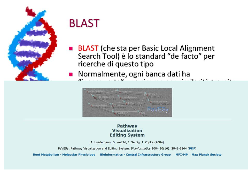 BLAST BLAST (che sta per Basic Local Alignment Search Tool) è lo standard de facto per ricerche di questo tipo.