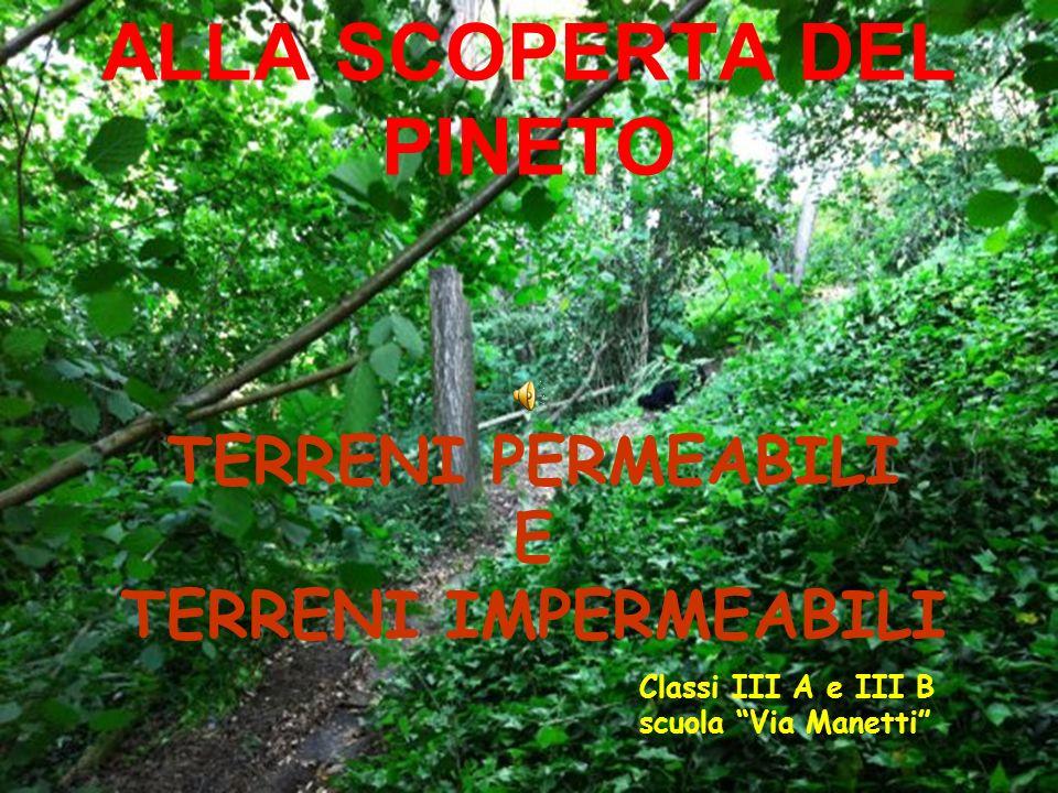 ALLA SCOPERTA DEL PINETO