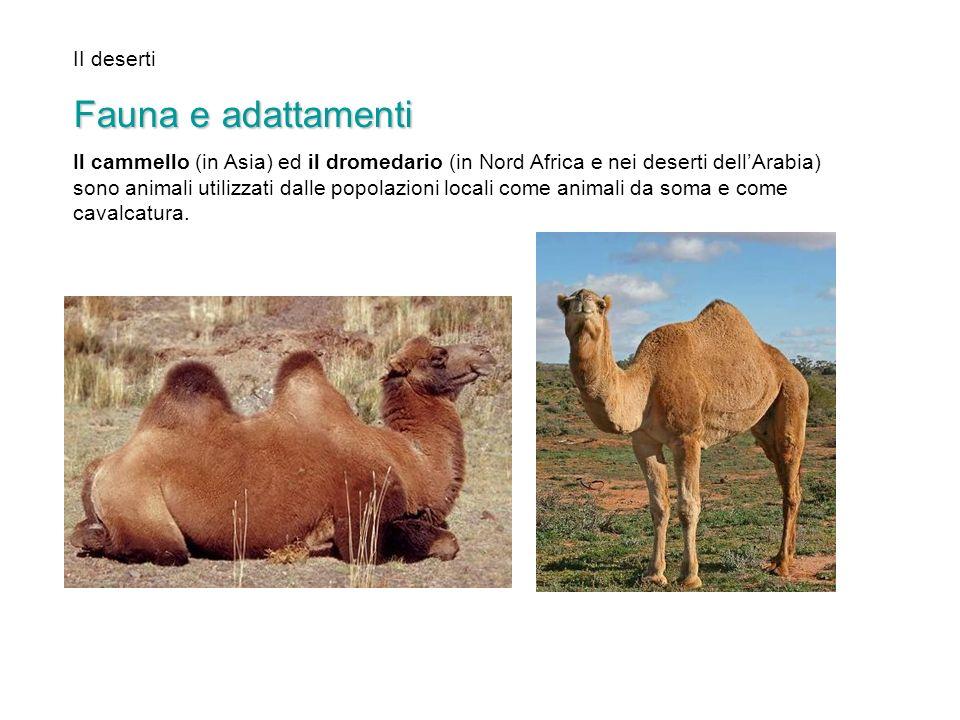 Fauna e adattamenti II deserti