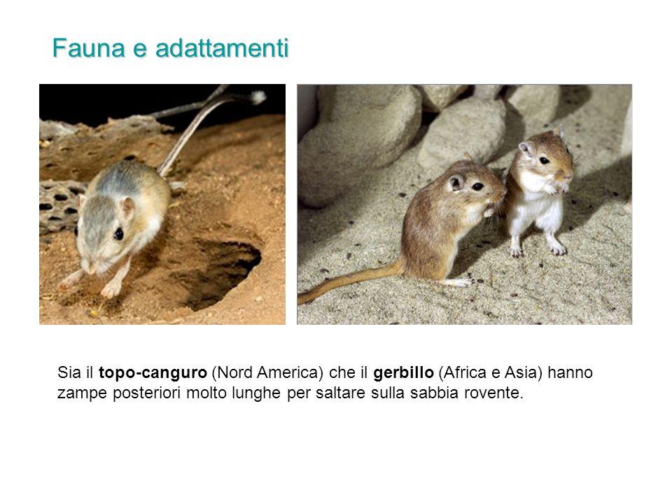 Fauna e adattamenti