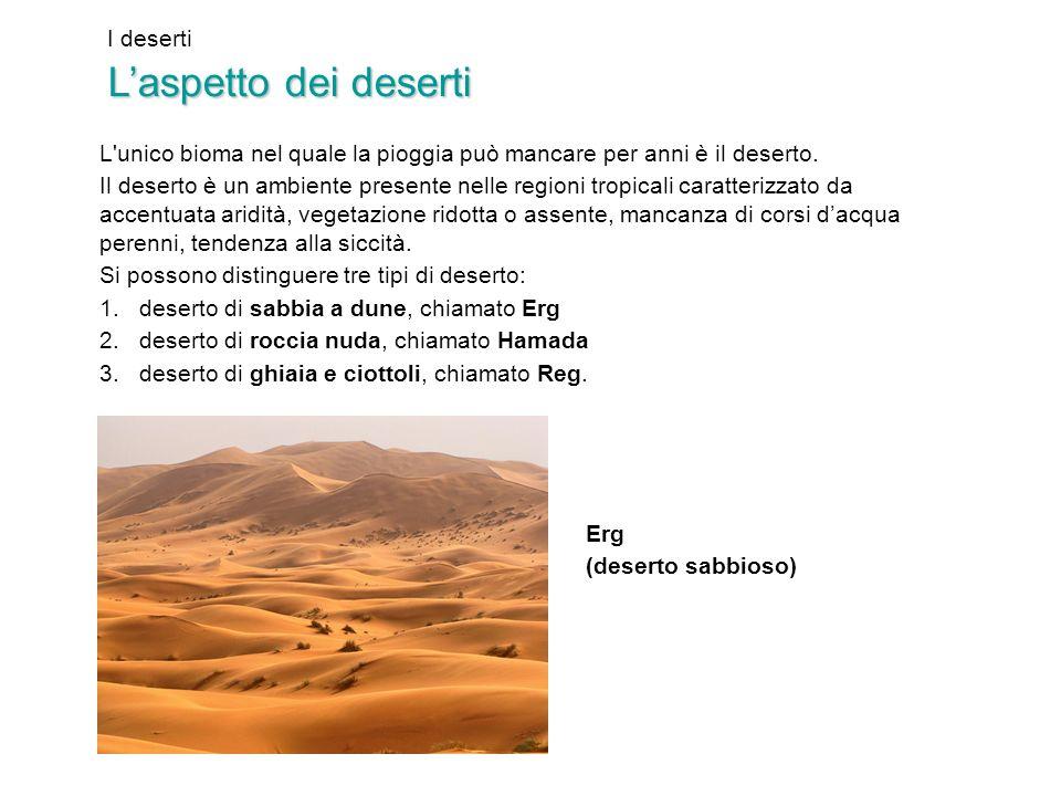 L'aspetto dei deserti I deserti