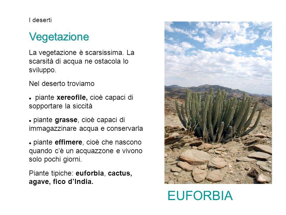 I deserti Vegetazione. La vegetazione è scarsissima. La scarsità di acqua ne ostacola lo sviluppo.