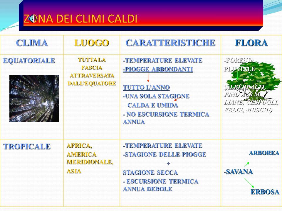 ZONA DEI CLIMI CALDI CLIMA LUOGO CARATTERISTICHE FLORA TROPICALE