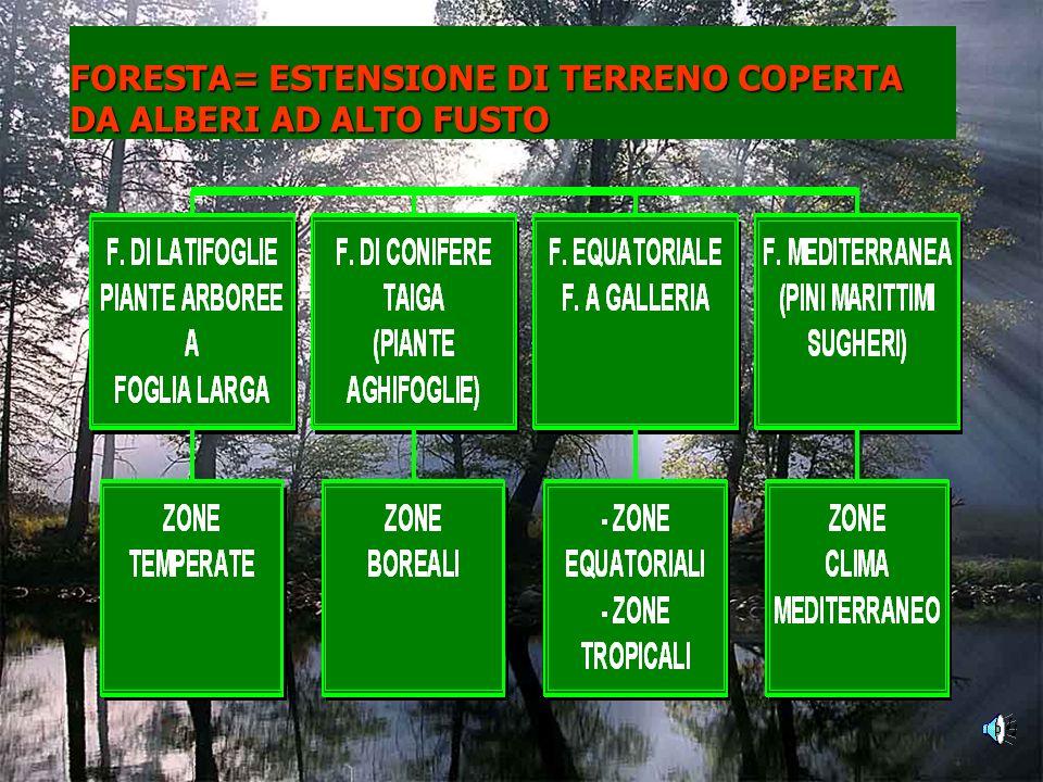 FORESTA= ESTENSIONE DI TERRENO COPERTA DA ALBERI AD ALTO FUSTO