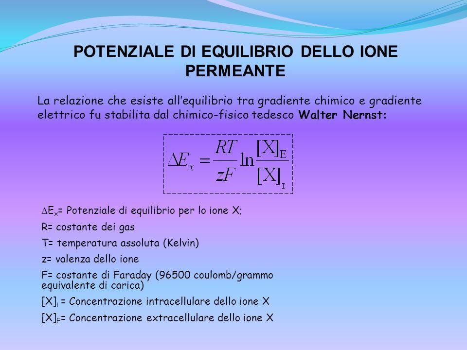 POTENZIALE DI EQUILIBRIO DELLO IONE PERMEANTE