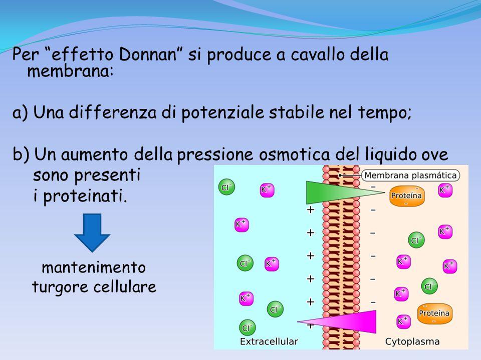 Per effetto Donnan si produce a cavallo della membrana: a) Una differenza di potenziale stabile nel tempo; b) Un aumento della pressione osmotica del liquido ove sono presenti i proteinati.