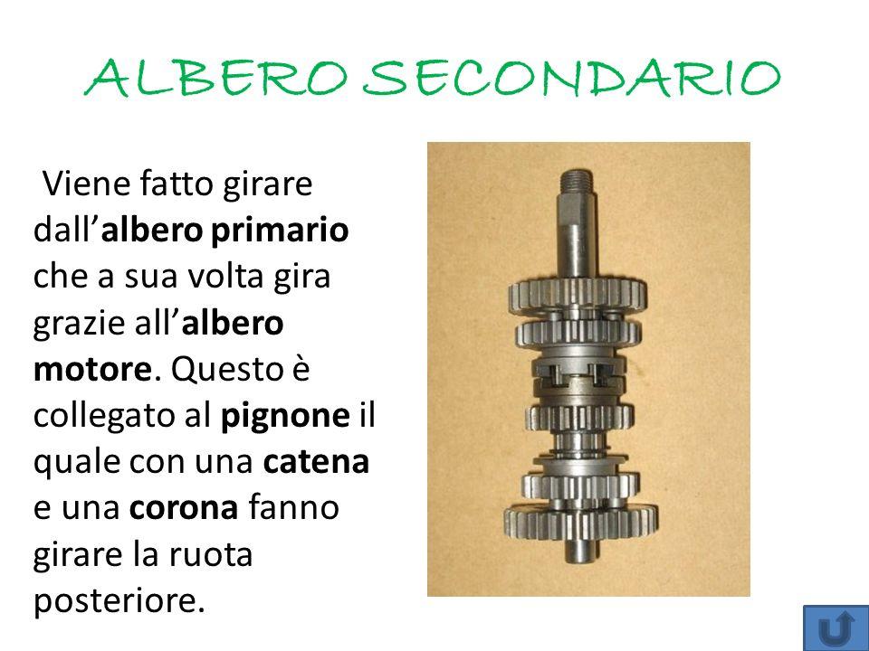 ALBERO SECONDARIO