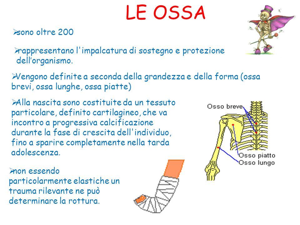 LE OSSA sono oltre 200. rappresentano l impalcatura di sostegno e protezione. dell'organismo.