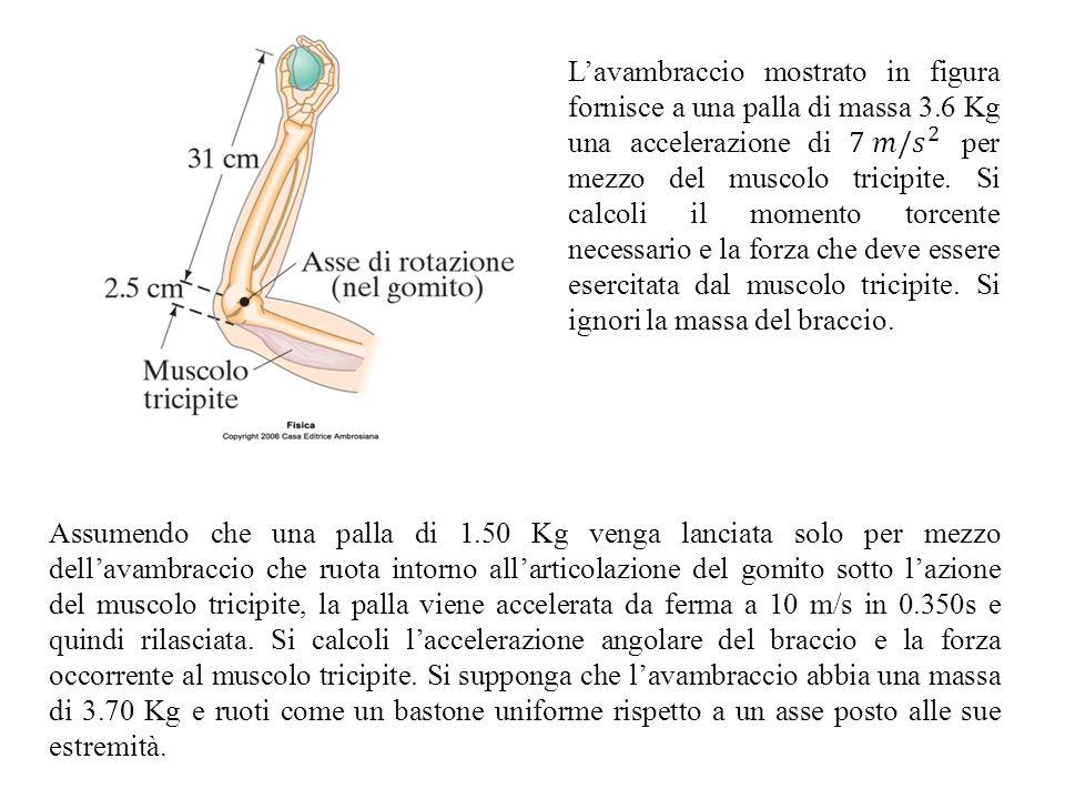 L'avambraccio mostrato in figura fornisce a una palla di massa 3