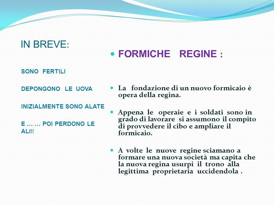 IN BREVE: FORMICHE REGINE :