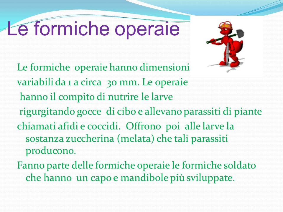 Le formiche operaie
