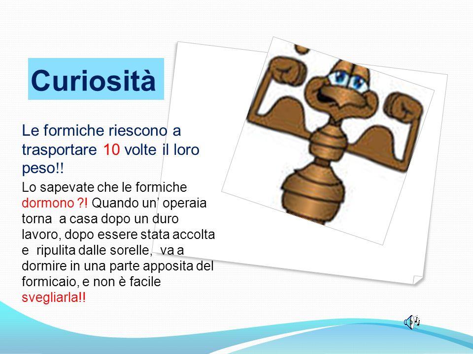 Curiosità Le formiche riescono a trasportare 10 volte il loro peso!!