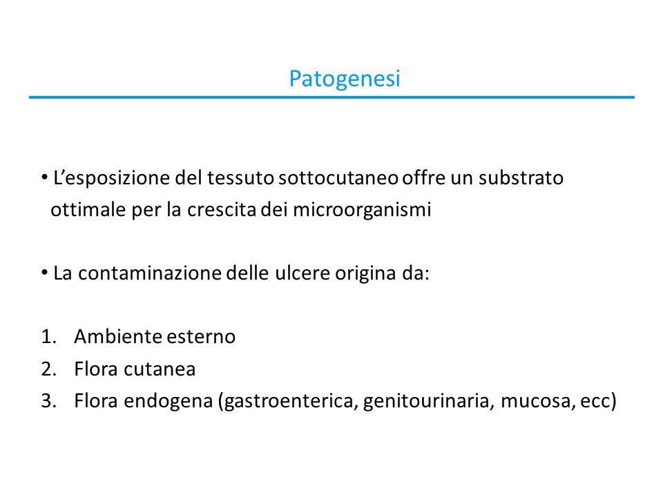 Patogenesi L'esposizione del tessuto sottocutaneo offre un substrato