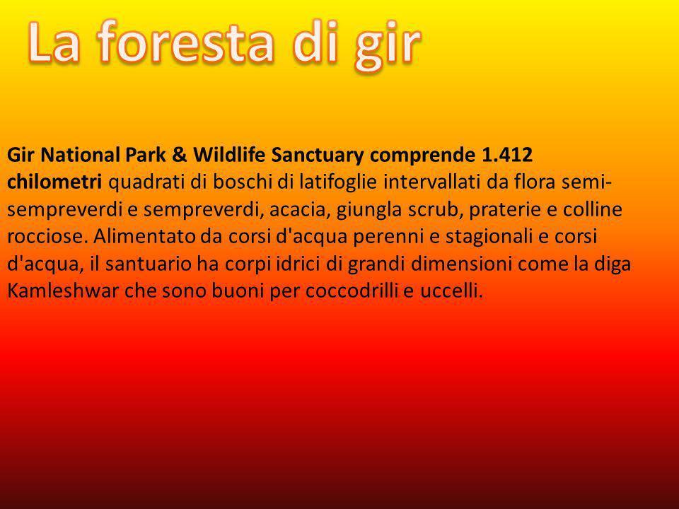 La foresta di gir