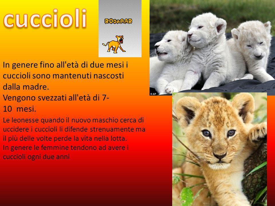 cuccioli In genere fino all età di due mesi i cuccioli sono mantenuti nascosti dalla madre. Vengono svezzati all età di 7-10 mesi.