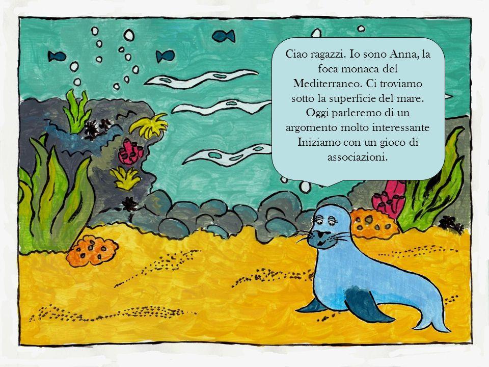 Ciao ragazzi. Io sono Anna, la foca monaca del Mediterraneo