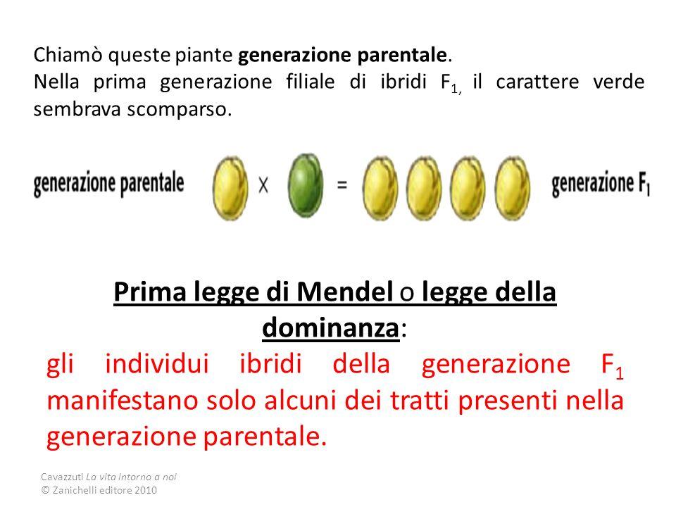 Prima legge di Mendel o legge della dominanza: