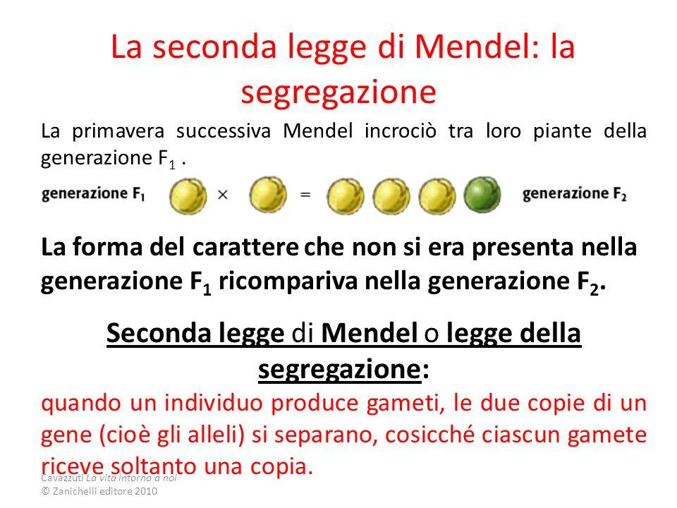 La seconda legge di Mendel: la segregazione