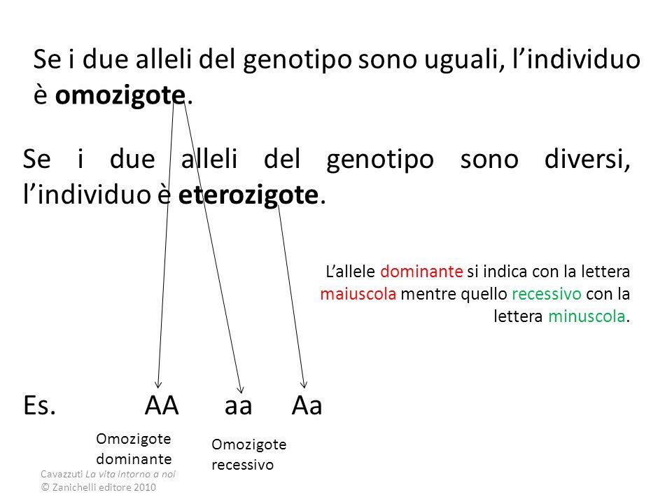 Se i due alleli del genotipo sono uguali, l'individuo è omozigote.