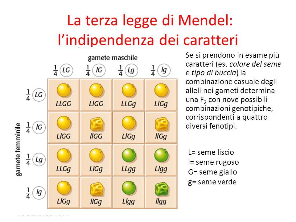 La terza legge di Mendel: l'indipendenza dei caratteri