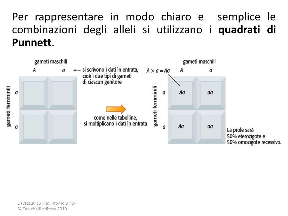 Per rappresentare in modo chiaro e semplice le combinazioni degli alleli si utilizzano i quadrati di Punnett.