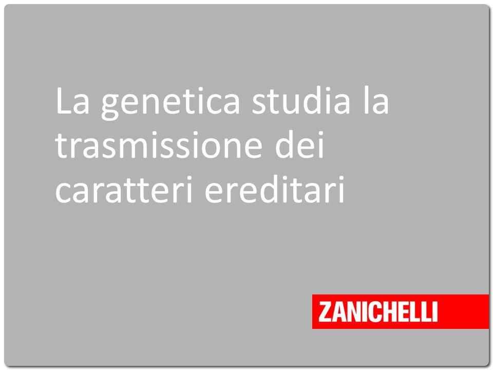 La genetica studia la trasmissione dei caratteri ereditari