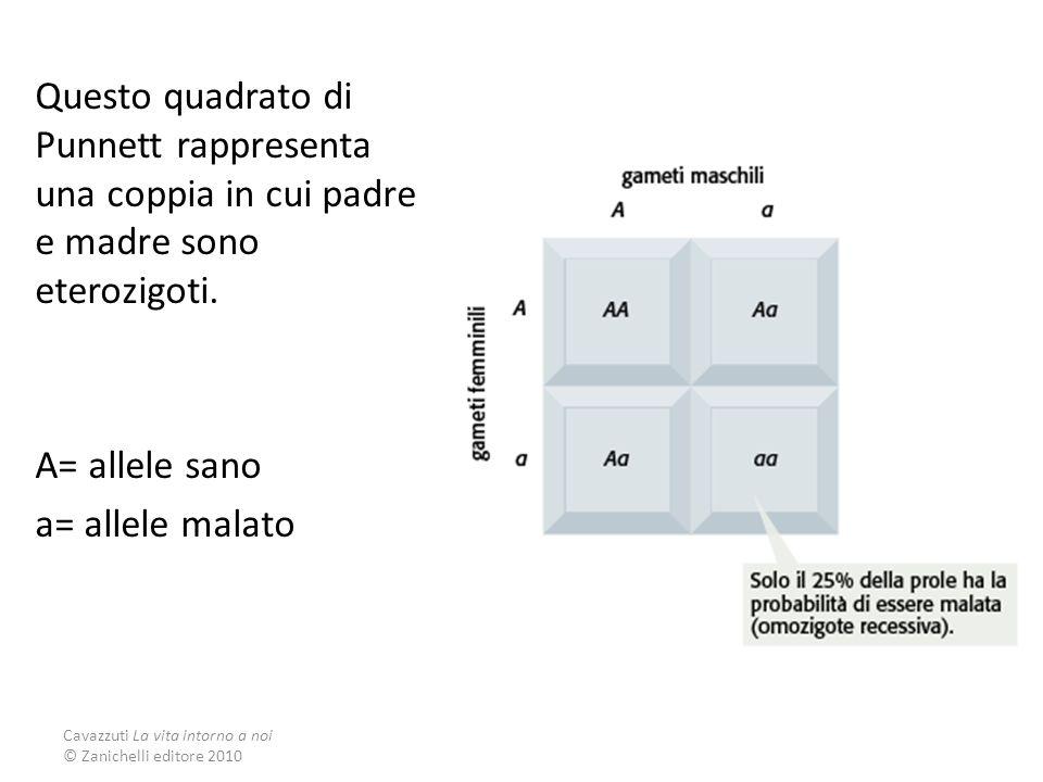 Questo quadrato di Punnett rappresenta una coppia in cui padre e madre sono eterozigoti.