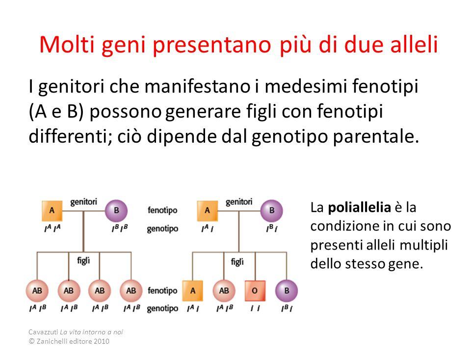 Molti geni presentano più di due alleli