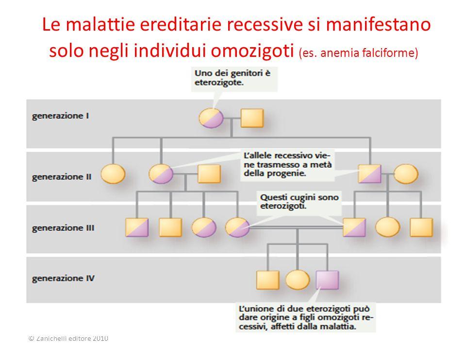Le malattie ereditarie recessive si manifestano solo negli individui omozigoti (es. anemia falciforme)